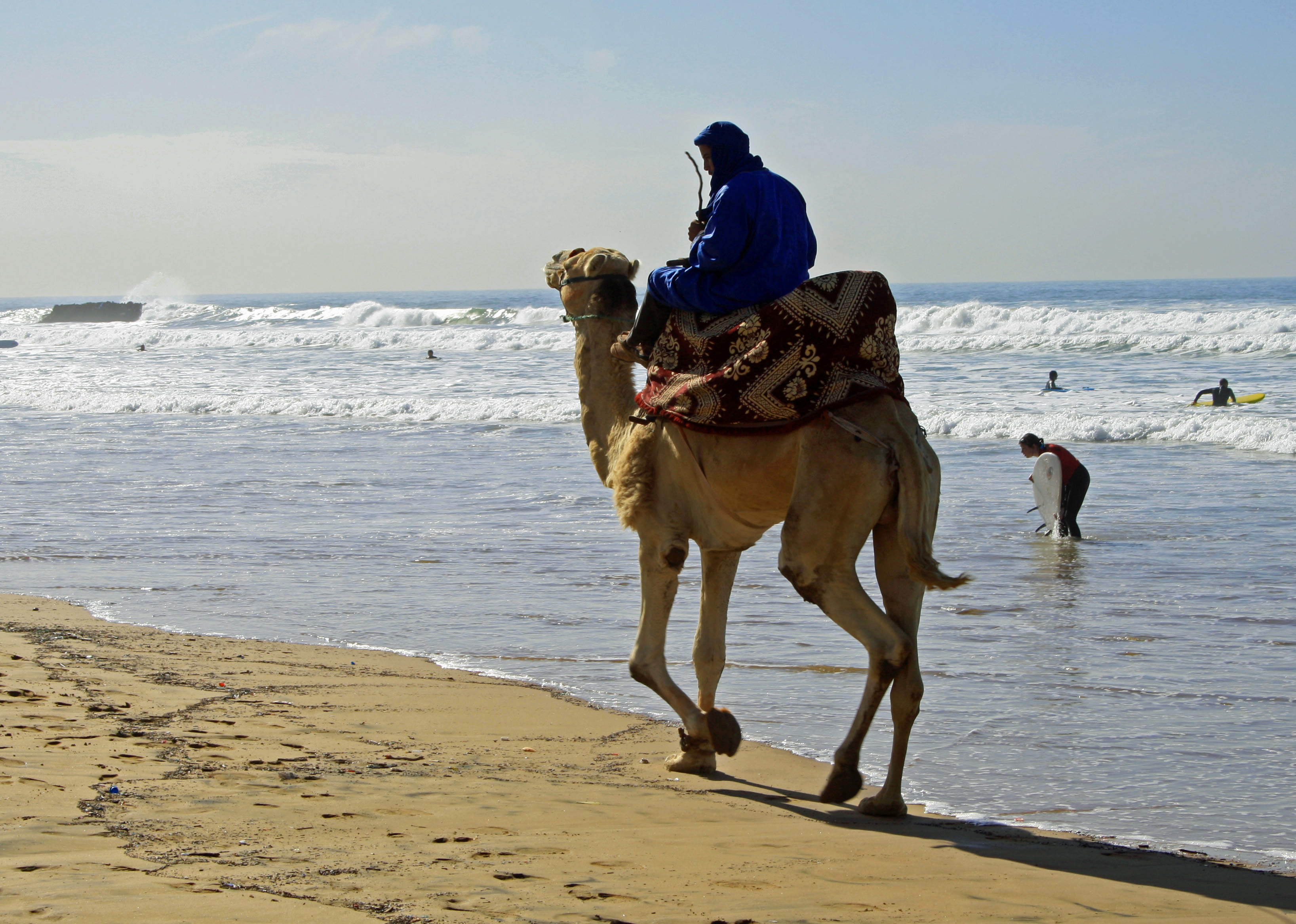 Camel in Morocco | The Spot Morocco,Taghazout, surf Morocco, where to surf in Morocco, surf camp Morocco, surfing Morocco, Morocco surf