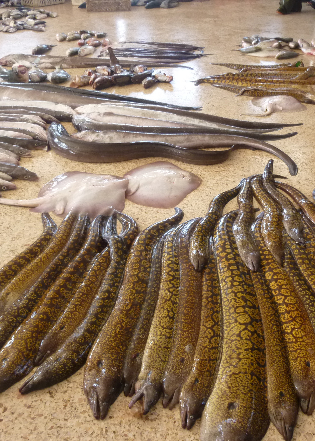 Fish Market Imsouanne Morocco| The Spot Morocco,Taghazout, surf Morocco, where to surf in Morocco, surf camp Morocco, surfing Morocco, Morocco surf